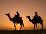 Camels Near the Pyramids at Giza  Cairo  Egypt
