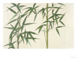 Bamboo