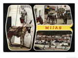 Mijas Postcard with Donkey