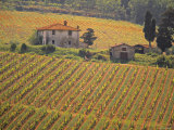 Vineyard  Greve in Chianti  Tuscany  Italy