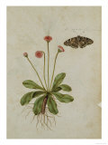 Botanical Study of a Daisy and Painted Lady Butterfly