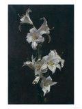 White Lilies  c1883
