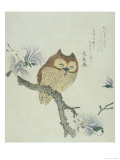Owl on a Flowering Magnolia Branch