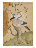 Black Headed Myna on a Tree-Trunk  India  19th Century