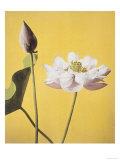 Lotus  19th Century