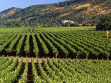 Wine Country  Napa Valley  California