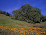 Walnut Creek  Mt Diablo State Park  California