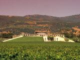 Opus One Winery  Napa Valley  California
