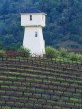 Silver Oak Cellars  Alexander Valley Wine Country  California