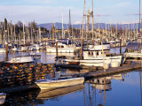 Squalicum Harbor with Mt Baker  Bellingham  Washington