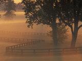 Foggy Sunrise on Horse Farm  Kentucky