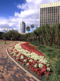 Park Area with Skyline  Orlando  Florida