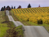 Couple Walking in Vineyard  King Estate Winery  Eugene  Oregon