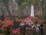 Spring Azaleas at Historic Bonaventure Cemetery  Savannah  Georgia