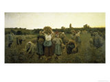 La Rappel Des Glaneursthe Recall of the Gleaners