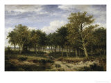 Wooded Landscape Near Surrey
