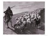 Navajo Sheepherder