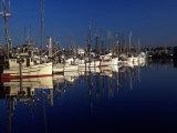 Fishing Boats in Port  Ballard  WA