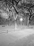 Snow Covered Promenade  Central Park