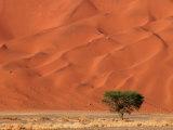 Sand Dunes of Sossusvlei  Namib Desert  Namibia