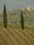 Vineyards  Tuscany  Italy