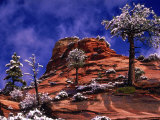 Zion National Park in the Snow  Utah