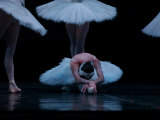 Ballet  Live Performance