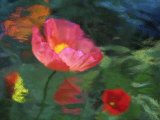 Impressionistic Poppies