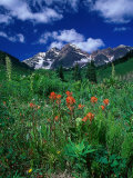 Wild Flowers and Mountain Maroon Bell  CO