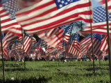 Grassy Field with American Flags Stuck in Ground