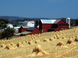 Amish Farm with Sheaves of Wheat