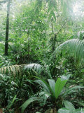 Rain Forest  Costa Rica