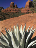 Agave Cactus and Red Rock Formations