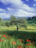 North Ronda  Andalucia  Spain