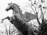 Winged Horse Statue  Mirabellgarten  Austria