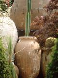 Tall Cactus in Terracotta Urn  Chelsea Flower Show 1997