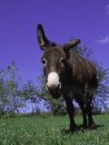 Donkey