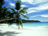 Coconut Palm on Beach  Seychelles