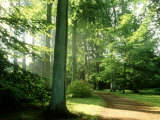 Woodland Garden in Autumn  Atmospheric Sunlight Through Trees onto Path  October
