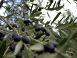Close-up of Tree in Umbria