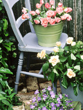 Blue Chair  Green & Blue Buckets Rosa (Peach & Apricot) Campanula