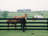 Woodford County Horse Farms  KY