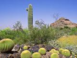 Desert Landscape & Cacti Desert Botanical Garden  Phoenix USA