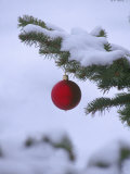 X Mas Ornament on Tree