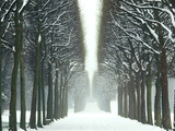 Snow on Tree Lined Avenue in Park  Misty View Parc De Sceaux  France