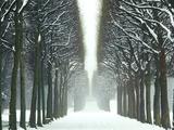Snow on Tree Lined Avenue in Park  Misty View Parc De Sceaux  France