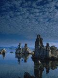 Tofas at Mono Lake  California
