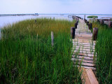 Shoreline and Dock  Chincoteague Island