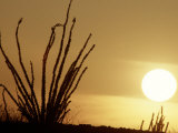 Desert Sunset with Ocotillo  CA