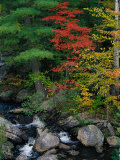 Fall Scenic  Acadia National Park  Maine